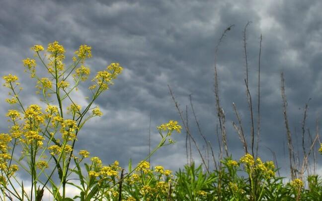 Pühapäevast hakkab ilm jahenema, jätkab vihmalainel.