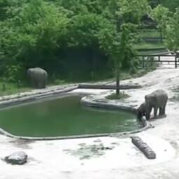 Спасение слоненка в Сеульском зоопарке.