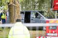 Politsei ajas puukaitsjad Haabersti hõberemmelga juurest ära