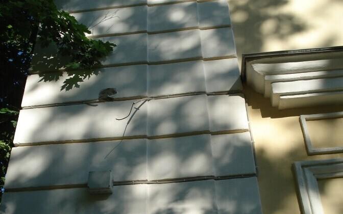 Инцидент произошел в самом центре Силламяэ.