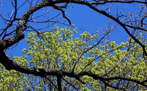 Puu ja taevas.