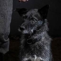 Oru Pearu koer