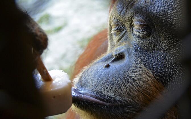 Jäätisepidu Rio de Janeiro loomaaias