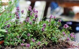 Аптекари Северного двора познакомят посетителей с возможностями использования растений