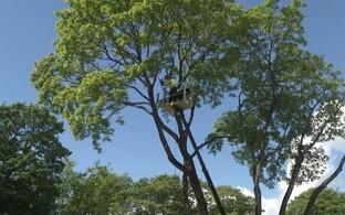 Проведенные в пярнуских парках исследования выявили опасные деревья, которые необходимо спилить.