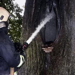 Tulekahju puuõõnsuses