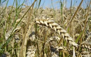 Maaga seotud õiguste teket seostatakse põlluharimise tulekuga 12 000 aastat tagasi, kuid tegu polnud üksikisiku omandiõigusega, vaid reeglitega ühiseks tegutsemiseks.