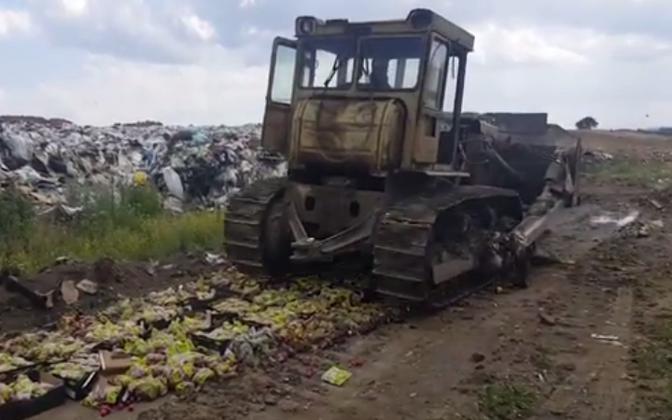 ВКрасноярске уничтожили около 800кг польских яблок иэстонского редиса