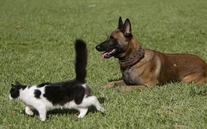 Иллюстративное фото. Кот и собака.