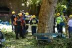 Дерево придавило более десяти человек на Мадейре.