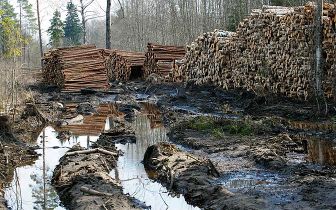 Metsatee pärast raiet.