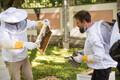 Kadrioru mesitarudest võetakse mett