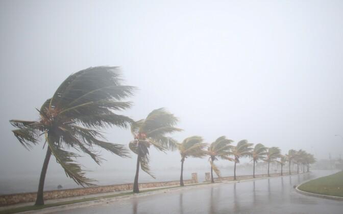 Приближение урагана предвещают сильный ветер и ливень.