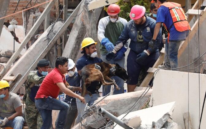Число жертв при землетрясении вМексике достигло 286 человек