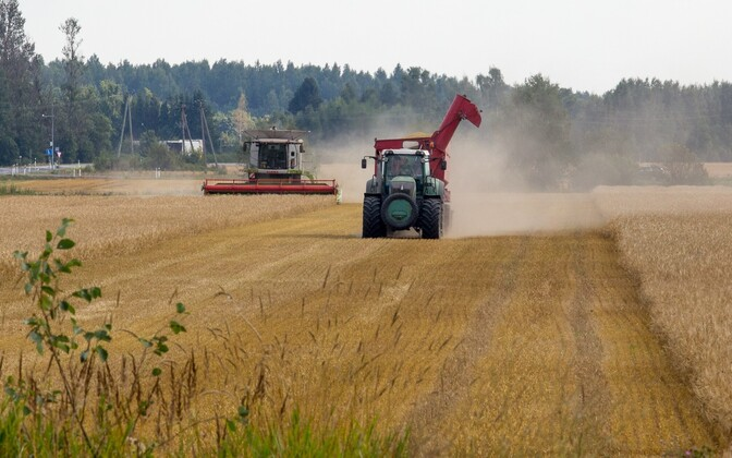 Grains being harvested in the Pärnu area.
