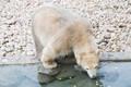 Jääkarumaailma avamine