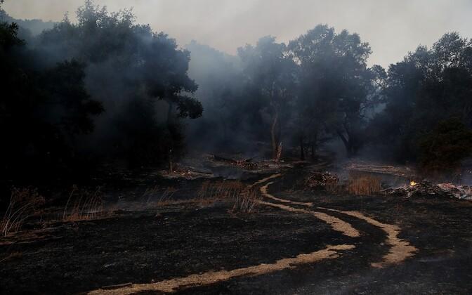 Число погибших  лесных пожаров вКалифорнии выросло до  29 человек