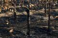 Põlengu tagajärjed Santa Rosas 12. oktoobril.
