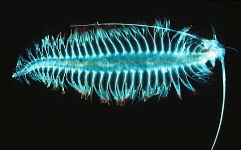 Hulkharjasusside kõhus elavad mikroobid toodavad ohtralt metaani.