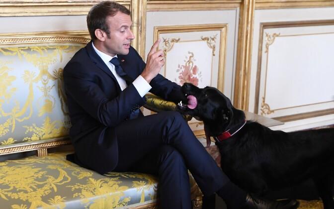 President Emmanuel Macron ja üleannetu Nemo.