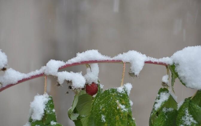 Снег в октябре.