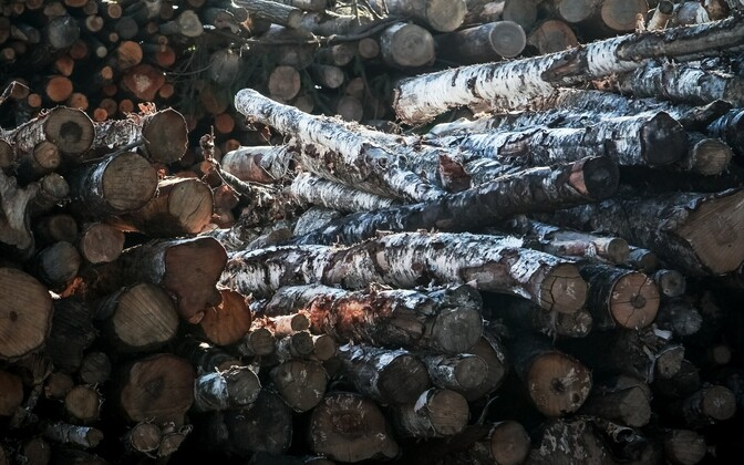 Stacks of timber. Photo is illustrative.