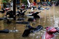 Üleujutus Vietnamis Hoi Ani linnas 6. novembril.