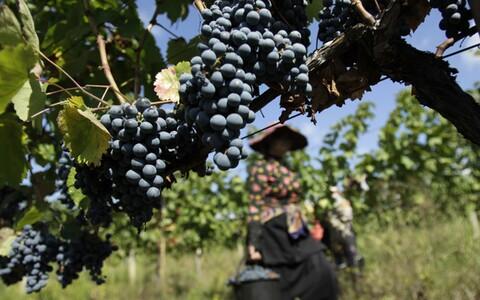 Gruusia aladel on kääritatud veini juba tuhandeid aastaid.