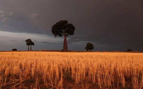 Toidu raiskamist vähendamata viib mahepõllunduse laiem rakendamine metsade pindala vähenemiseni.