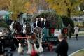 Valge Maja jõulupuu