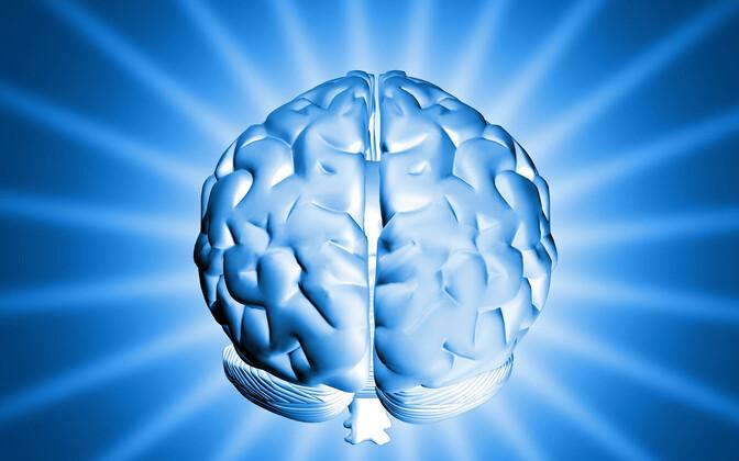 Üldintelligentsi kergitamiseks ei piisa vaid ristsõnade lahendamisest või isegi malemängu õppimisest.