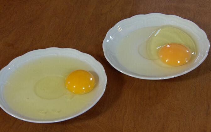 Salmonelloosi põhjustavad paljuski halvasti kuumtöödeldud munad.