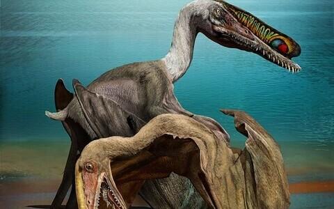 Pterosaurus kunstniku nägemuses.