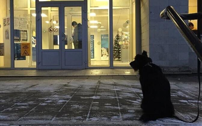 О взгляде путешественников XIX века на Нарву расскажет доцент Елена Нымм