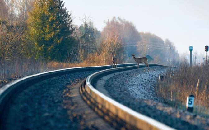 Täna valmis aruanne Rail Baltic raudtee tarastamise ja loomapääsude teemal.