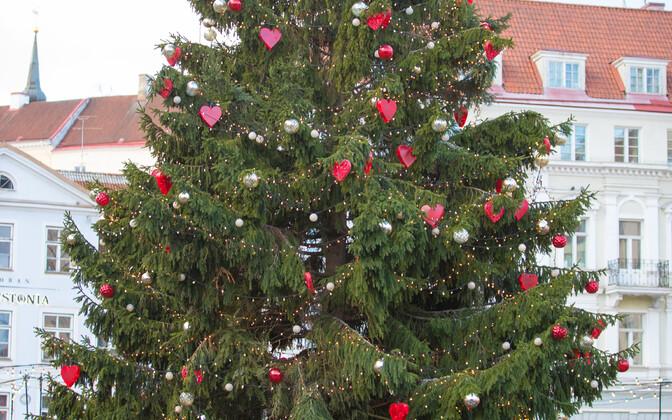 Рождественская ель на Ратушной пллощади в Таллинне