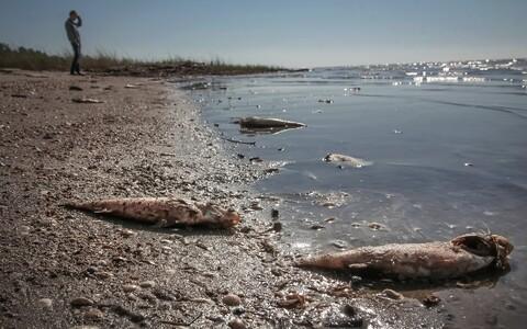 Surnud kalad Pärnu rannas.
