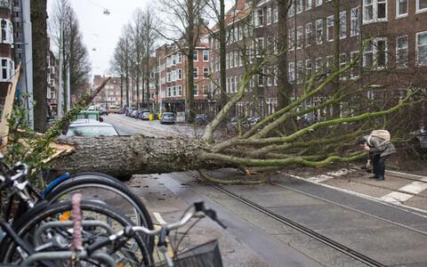 Упавшее дерево в Амстердаме.