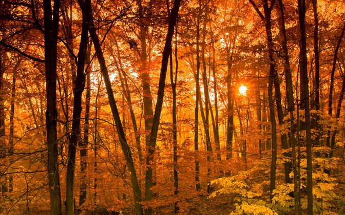 Inimtegevus on olnud pikaajalise mõjuga Euroopa taimkattele ning sellel on olnud mõju nii regionaalsele kliimale