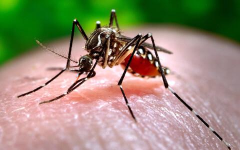 Muu hulgas dengue'i palavikku levitav sääsk  Ae. aegypti.