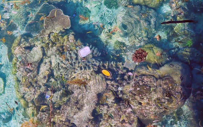 Teadlased analüüsisid tuhandetelt korallidelt pärinevaid proove.