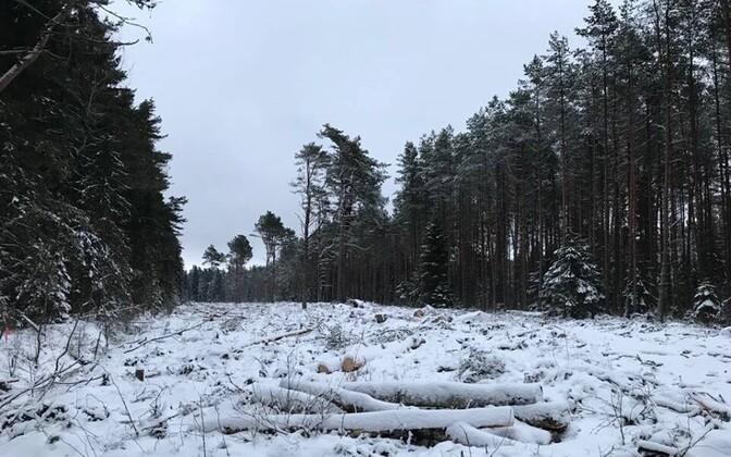 EMA foto raiest Vääna-Jõesuus Jahilossi teel.