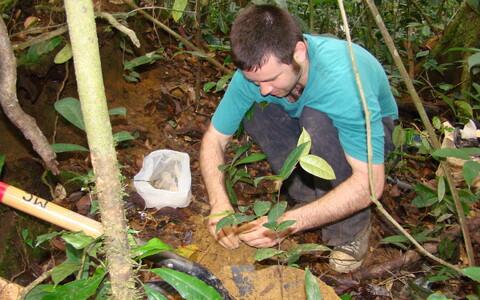 Välitöödel Aafrikas, Gabonis. Mullaproovide sees on seeneniidid.