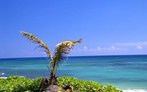 Maailmamere tõus ähvardab muu hulgas mitmeid Vaikse ookeani saareriike.