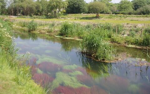 Hayle'i jõgi Inglismaal on keskkajast saati toimunud kaevandustegevuse ja metalltööstuse tulemusena tugevalt reostunud. Sadade aastate jooksul on kohalik forellipopulatsioon kujunenud geneetiliselt väga erinevaks lähedalasuvates puhastes jõgedes elavatest