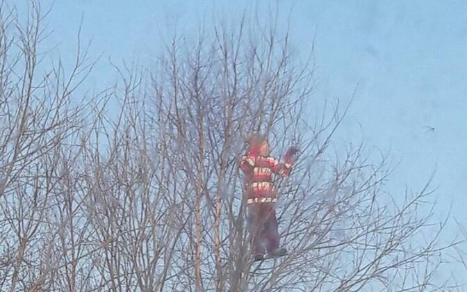 Девочка на дереве на улице Рандвере.