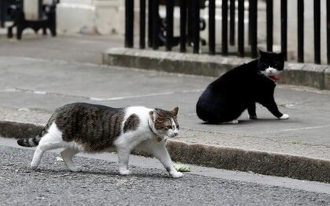 Коты Ларри и Палмерстон