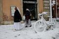 Roomas lumes