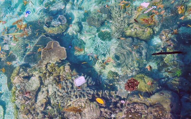 Merre sattunud plast kahjustab mereelustikku.
