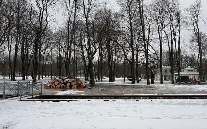 Raietööd Kadrioru pargis.